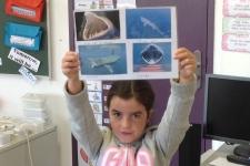 ndsc-ce2-cm1-requin-pelerin-2017-3