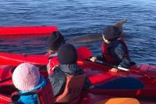 ndsc-cm1-kayak-2017-6
